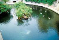 Fonte Aretusa (Fontana delle papere)  - Siracusa (7175 clic)