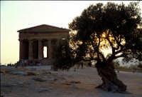 Tempio della Concordia  - Valle dei templi (2505 clic)
