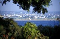 Le saline viste da Mozia  - Mozia (2505 clic)