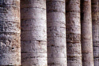 Il Tempio di Segesta  - Segesta (3138 clic)