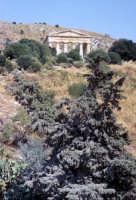 Tempio di Segesta  - Segesta (1853 clic)