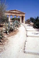 Tempio di Segesta  - Segesta (1858 clic)
