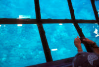 Riserva dello Zingaro fra San Vito Lo Capo e Scopello - escursione su una barca con lo sfondo trasparente attraverso cui è possibile vedere i fondali  - Riserva dello zingaro (6664 clic)