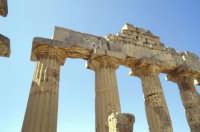 Il Tempio di Selinunte  - Selinunte (2117 clic)