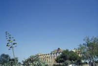 Il Tempio di Selinunte  - Selinunte (2005 clic)
