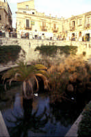 Fontana Aretusa  - Siracusa (1447 clic)