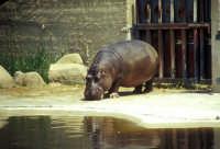 Zoo Safari di Paternò  - Paternò (2244 clic)