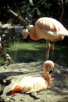 Zoo Safari di Paternò  - Paternò (1423 clic)