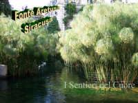 Papiro della Fonte Aretusa  - Siracusa (2195 clic)