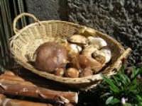 Floresta i funghi  - Floresta (5311 clic)