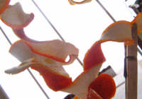 Bucce d'arancia SCICLI Paolina Bonaparte