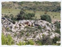 CONTRADA RENNA ALTA:GROTTE DEL FINOCCHIO  - Noto (2363 clic)