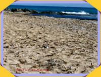 ISOLA DELLE CORRENTI:mare, sole, sabbia....rilassarsi con gli uccelli,   - Isola delle correnti (3557 clic)