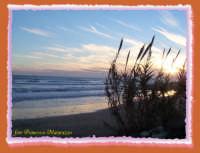 canne al vento  - Marina di ragusa (2312 clic)