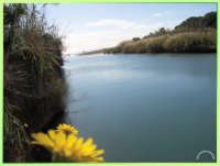 Foce del fiume Cassibile  - Cassibile (4121 clic)