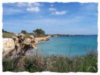 ALLA FOCE DEL  FIUME CASSIBILE:mare e fiori secchi  - Cassibile (9381 clic)