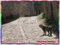 PASSEGGIANDO PER ERICE:gatta ci cova  - Erice (1478 clic)
