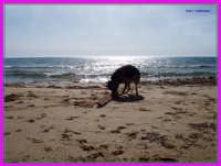 mare ragusano  - Marina di ragusa (5223 clic)