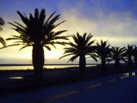 Le palme di Tonnarella,zona di mare.  - Mazara del vallo (7183 clic)