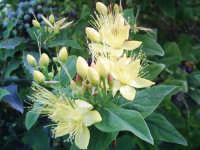 un fiore   - Aci catena (3196 clic)