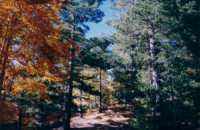 Aberi di colori diversi...  - Etna (2150 clic)