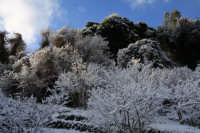 nevicata 2009  - San piero patti (3713 clic)