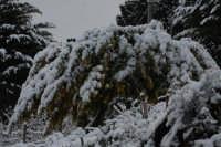 nevicata 2009  - San piero patti (3224 clic)