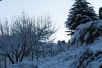 nevicata 2009  - San piero patti (2313 clic)