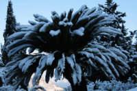 nevicata 2009  - San piero patti (2405 clic)