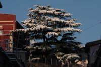nevicata 2009 il mitico pino delle scuole elementari   - San piero patti (6306 clic)