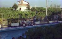 Un angolo di piscina in mezzo al verde 1974  - Catania (2824 clic)