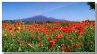 ?  - Etna (3511 clic)