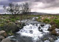 Ruscello nelle campagne di Maletto   - Etna (6119 clic)