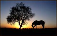 Al tramondo sulle campagne di Misterbianco  - Misterbianco (7119 clic)