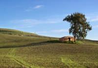 Sulle campagne di Valguarnera  - Valguarnera caropepe (5502 clic)