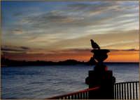 Le colombe di Acicastello  - Aci castello (2516 clic)