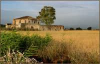 Sulla piana di Catania una masseria abbandonata circondata di Grano  - Catania (6328 clic)