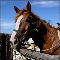 Cavallo in Agriturismo  - Aidone (6636 clic)