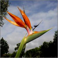 Uccelli del Paradiso  - Catania (3301 clic)