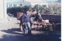 Ultimo contadino Usticese con il suo Asino alla fine della giornata lavorativa.  - Ustica (4165 clic)
