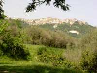 San Salvatore di Fitalia - Panorama  - San salvatore di fitalia (4212 clic)
