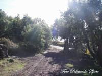 Bosco di Santa Maria di Licodia, m 1100 slm. Sentieri nel bosco   - Santa maria di licodia (2296 clic)