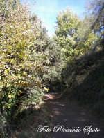 Bosco di Santa Maria di Licodia, m 1100 slm.   - Santa maria di licodia (2228 clic)