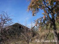 Bosco di Santa Maria di Licodia, m 1100 slm.   - Santa maria di licodia (1991 clic)