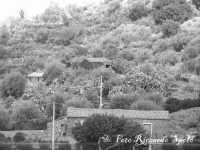Santa Maria di Licodia Campagne licodiesi coltivate ad uliveti ed agrumeti, con le tipiche case costruite a secco.  - Santa maria di licodia (2178 clic)