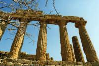 La valle dei Templi ad Agrigento  - Agrigento (2979 clic)