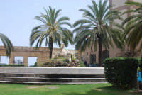 Palermo e le sue belle palme PALERMO stefania verderosa
