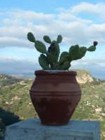 vaso e panorama  - Castelmola (3552 clic)
