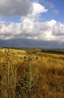 Paesaggio collinare ad est della piana di Gela. I territori agricoli abbandonati si stanno trasformando in steppa.   - Gela (3816 clic)