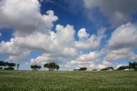 Paesaggio lungo la Sp21  - Donnafugata (2459 clic)